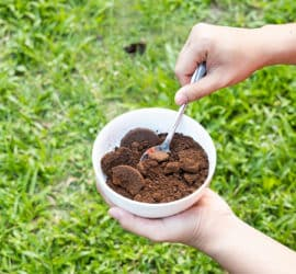 Kaffee als Düngemittel - damit der Garten grünt und blüht