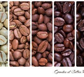 Neue Kaffeesorten – was ist dieses Jahr im Trend?
